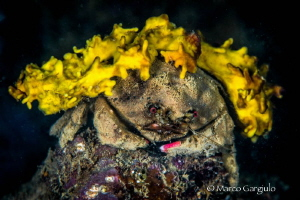 Carring a yellow sponge by Marco Gargiulo